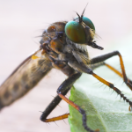 10 Fascinating Facts About Mosquitoes
